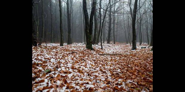 La neige arrive en Ardenne - La DH