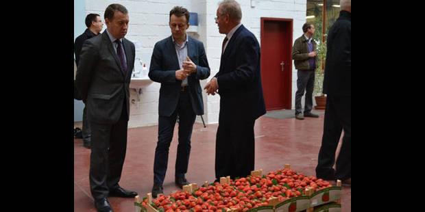 Les fraises de Wépion sont là - La DH