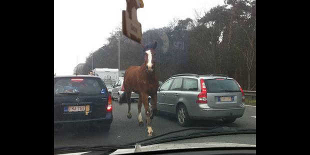 Un cheval sur l'autoroute - La DH