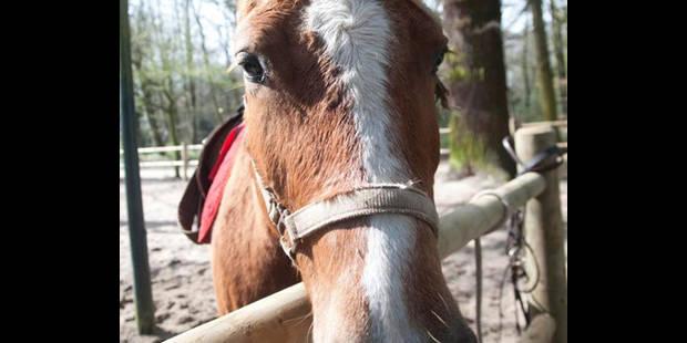 Une journée à cheval - La DH