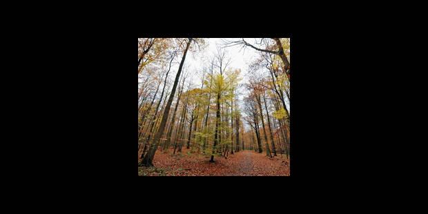 Infractions en forêt de Soignes - La DH