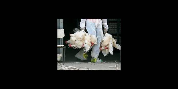 Le virus H5N1 reste  difficilement transmissible - La DH