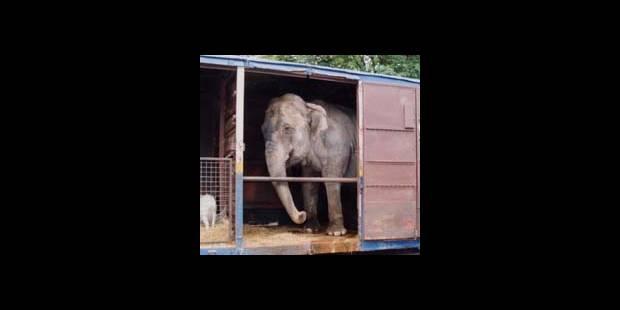 Des cirques sans animaux - La DH