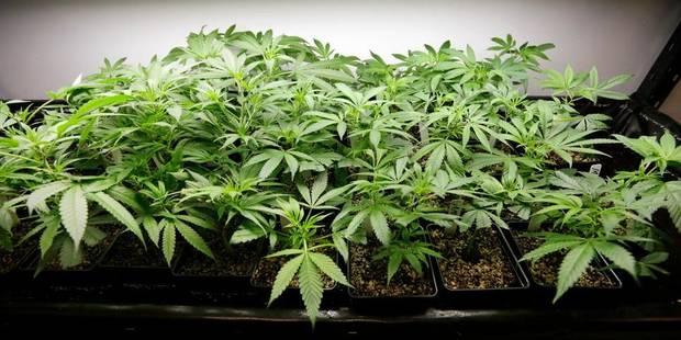 Arrêté dans le train avec 380 grammes de résine de cannabis - La DH