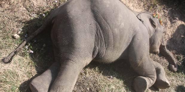 Il abat un éléphant et prend la pose avec lui... - La DH