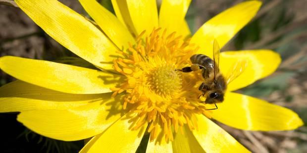 Pollen: restez vigilants - La DH