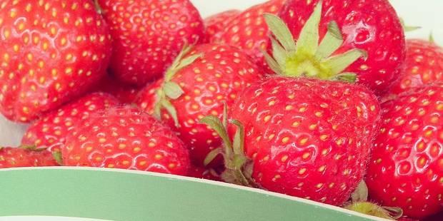 La fraise primeur est arrivée ! - La DH