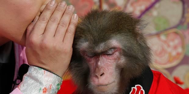 Un couple d'Indiens légue sa fortune à son singe - La DH