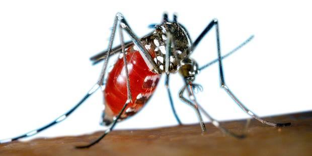 Le moustique tigre pourrait arriver chez nous (CARTE) - La DH