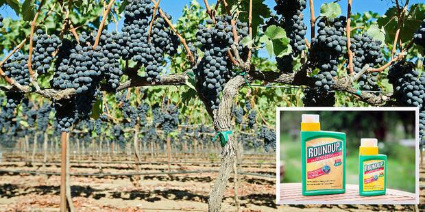 Du Roundup dans 100 % des vins californiens - La DH