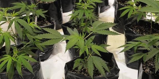 Arrêtés alors qu'ils voulaient voler du cannabis - La DH