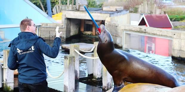 Le Sea Life à la rescousse des petits phoques - La DH