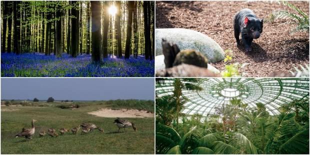 Huit lieux magiques où profiter du printemps en Belgique - La DH
