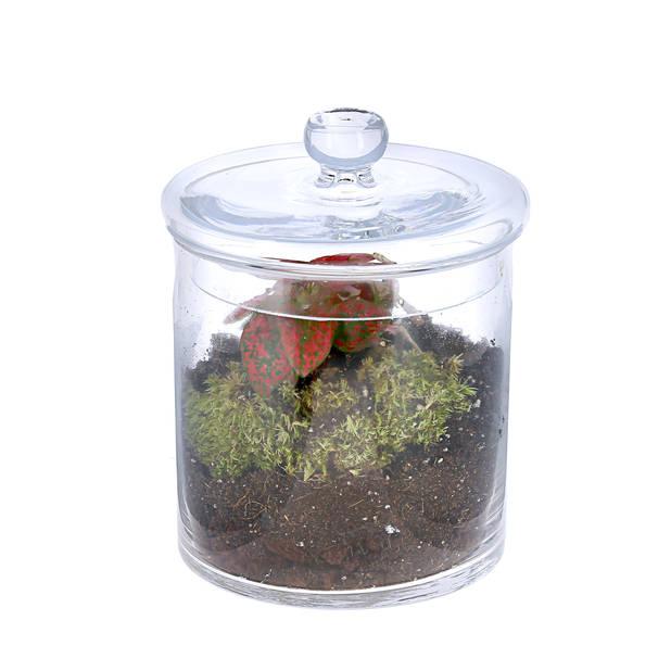 Mini terrarium Nature et Découvertes.