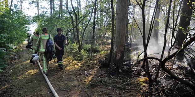 """Incendies en Brabant wallon : """"Un sapin, c'est comme de l'essence !"""" - La DH"""