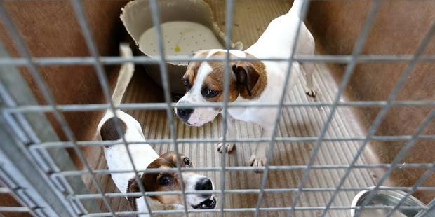 Bruxelles: Les refuges pour animaux affichent déjà complet - La DH
