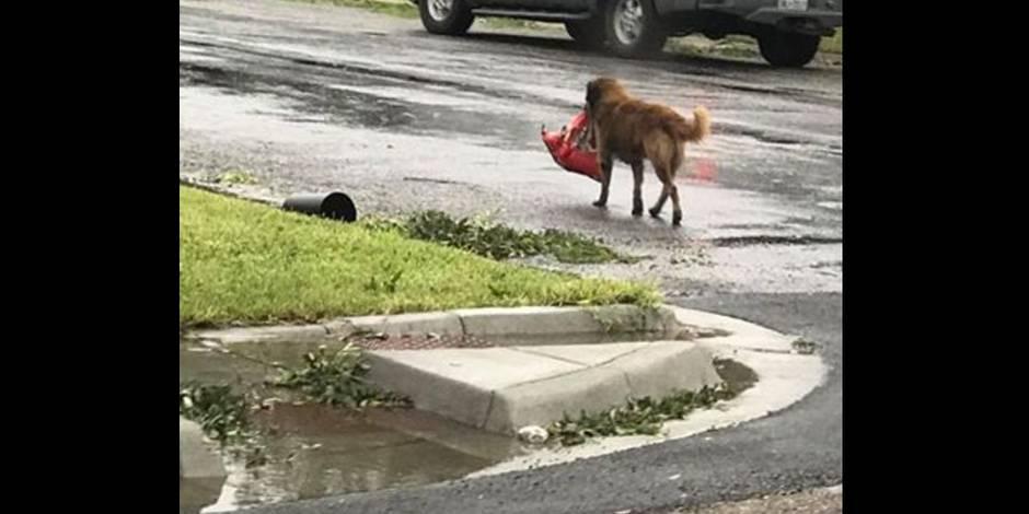 Ouragan Harvey : un bilan lourd de huit morts au Texas