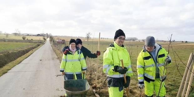 Des personnes souffrant de déficience mentale épaulent les ouvriers des espaces verts à Ath - La DH