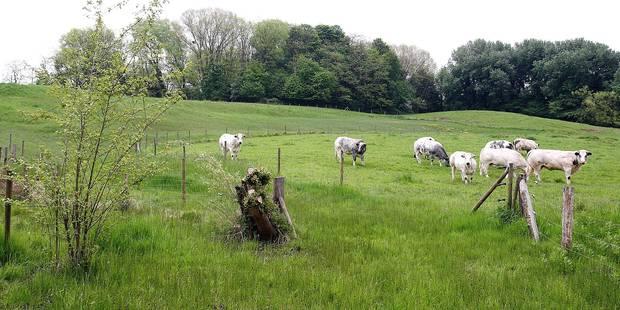 Berchem-Sainte-Agathe: Cinq projets retenus par Bruxelles Environnement - La DH