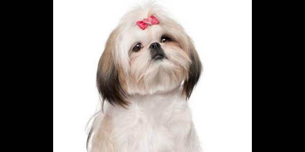 La Belgique compterait au total 1.120.000 chiens - La DH