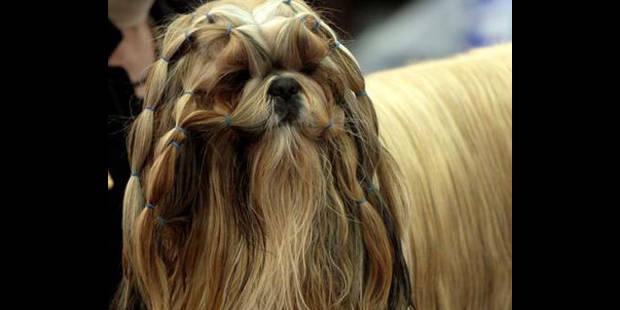 Une dizaine de chiens interdits à Ans ! - La DH