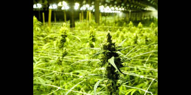 2.400 plants de cannabis mis au jour à Forest - La DH