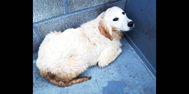 Elle jette sa chienne dans le fleuve - La DH