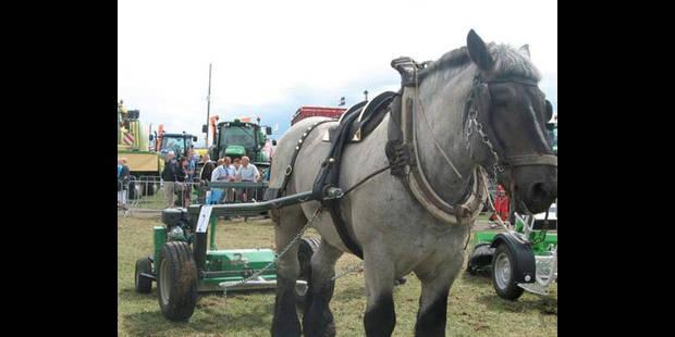 8e concours de chevaux de trait - La DH