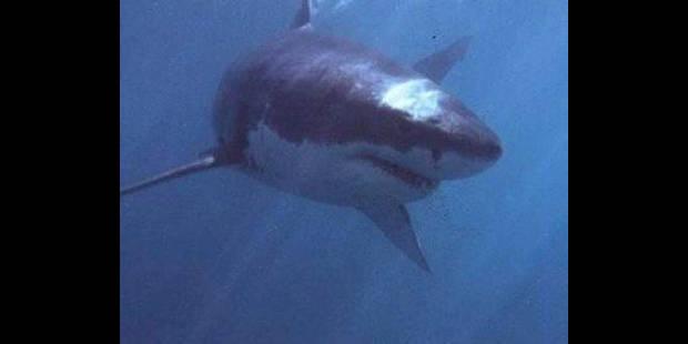 Alerte au requin blanc après une 3e attaque mortelle - La DH