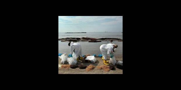 Marée noire: la tentative de cimentation durera encore au moins 24 heures - La DH