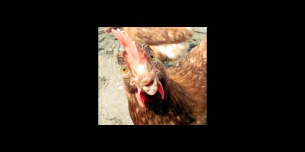 Morales critiqué pour avoir lié consommation de poulet et déviance sexuelle
