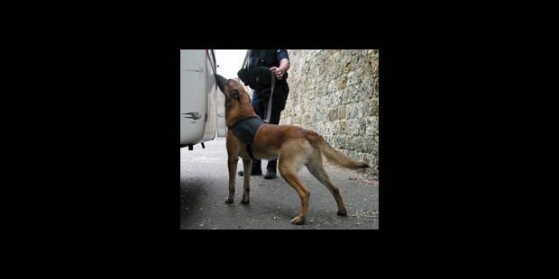 Pas assez de chiens policiers - La DH