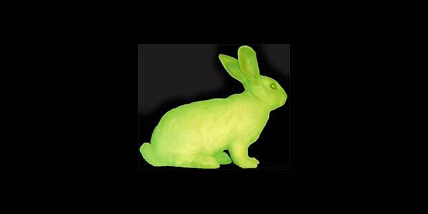 Et voici le lapin vert fluo