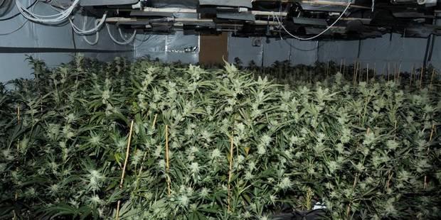 Les policiers d�couvrent une plantation de cannabis suite � une dispute entre p�re et fils !