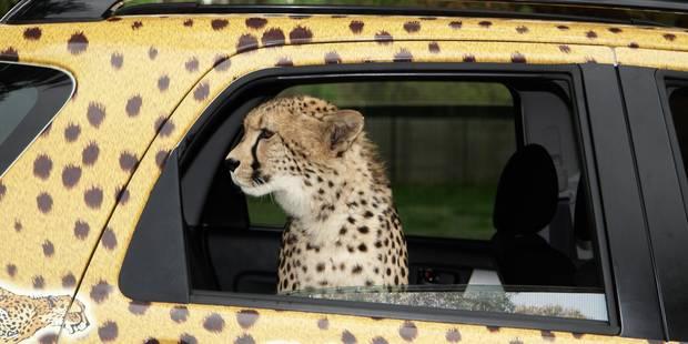 Nos voitures d'occasion font le bonheur de l'Afrique - La DH