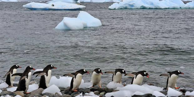 Ils passent Noël bloqués dans la glace en Antarctique - La DH