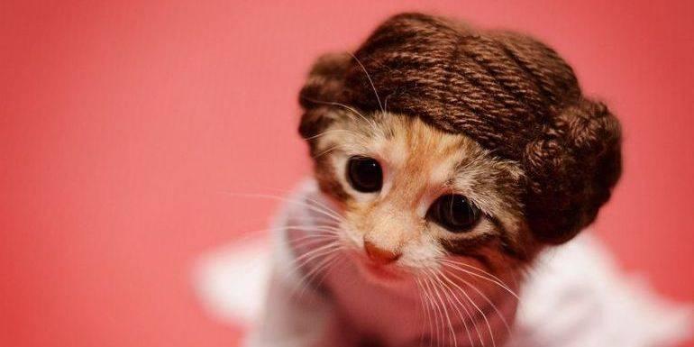 Un chaton déguisé en Princesse Leia pour la bonne cause?