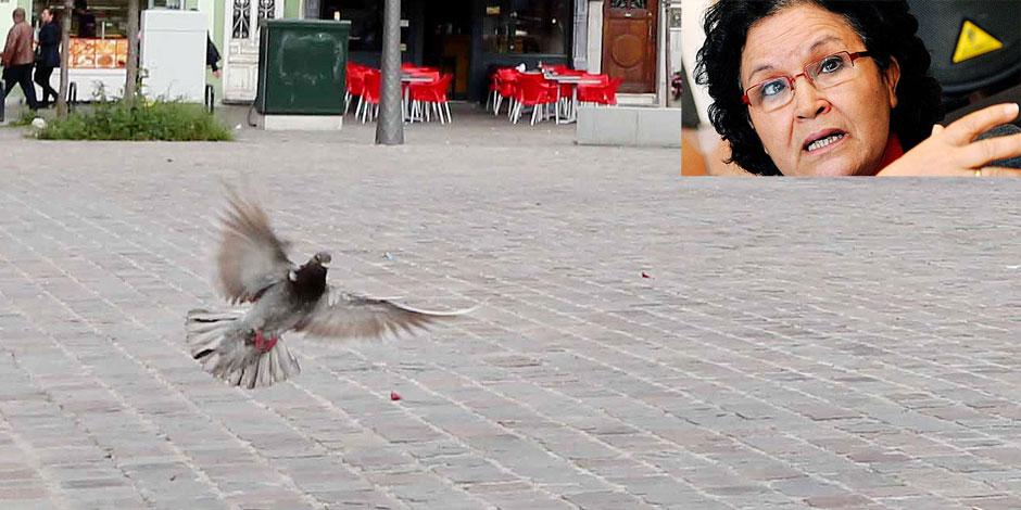 A Bruxelles, on attrape des pigeons pour manger - La DH