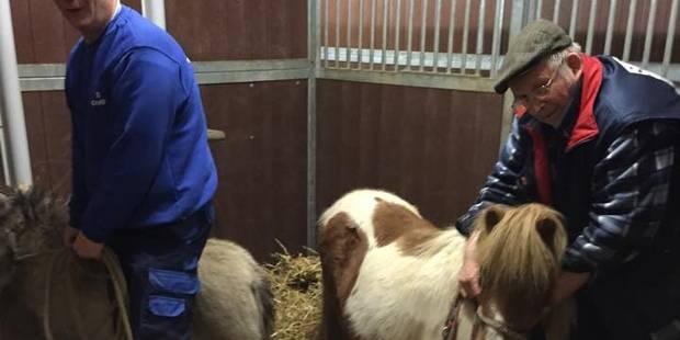 Carnières : Des poneys et des moutons saisis - La DH