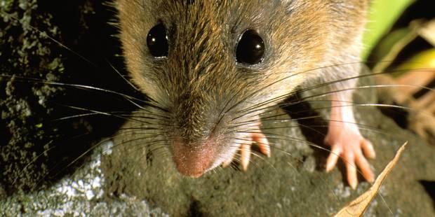 Un rat perturbe la classe - La DH