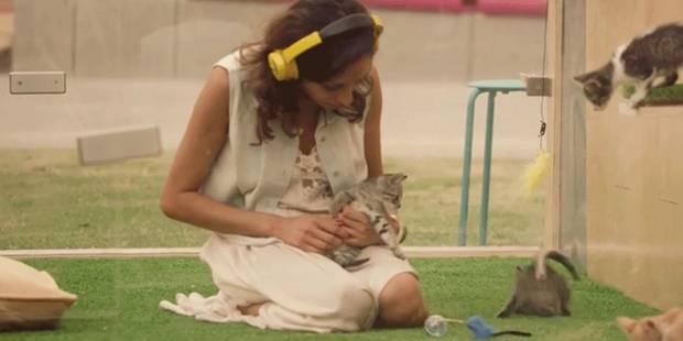 Des chatons pour lutter contre le stress - La DH