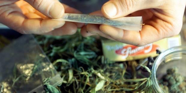 Découverte de 16 plants de cannabis dans une habitation à Boussu - La DH