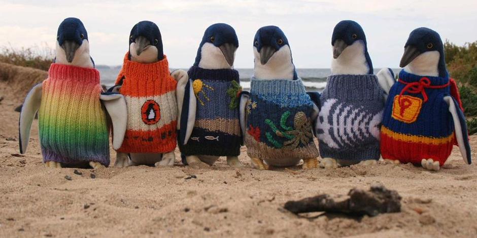 A 109 ans, Alfred tricote des petits pulls pour sauver des pingouins