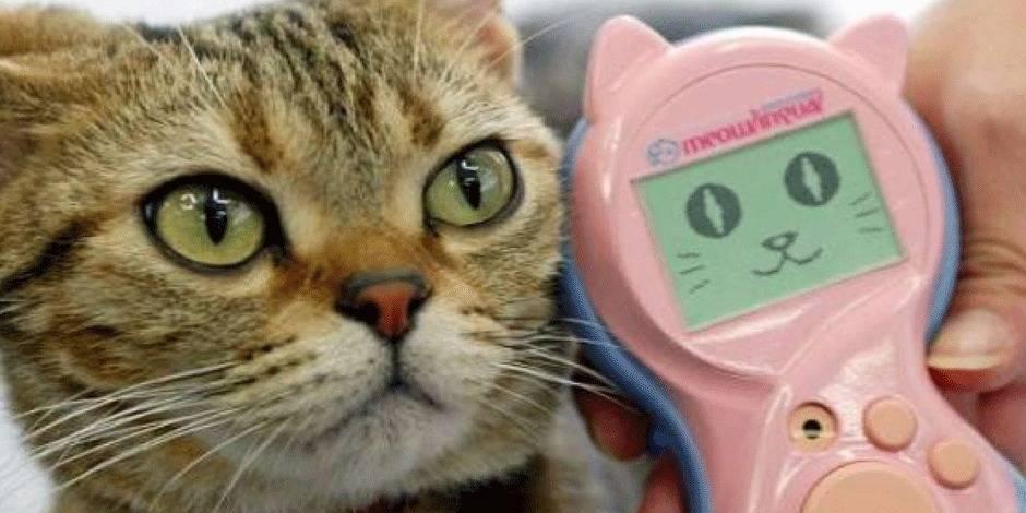Meowlingual, l'appareil qui traduit les miaulements de votre chat
