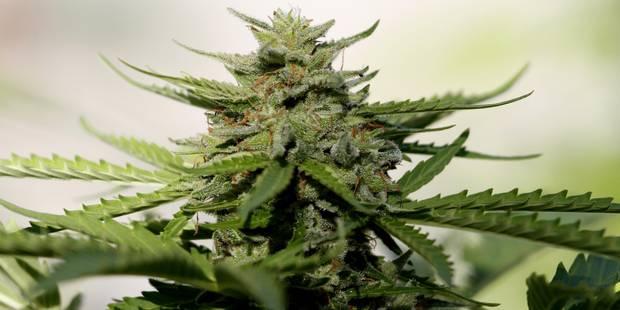 Le dealer vendait du cannabis à des mineurs! - La DH