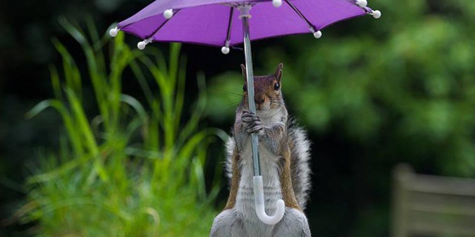 Cet écureuil est le plus incroyable des modèles photo