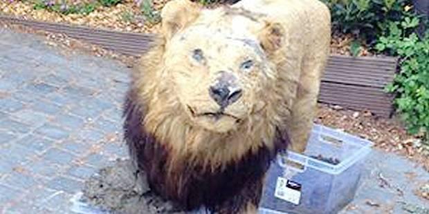 Damien Thiéry face au Lion des Flandres - La DH