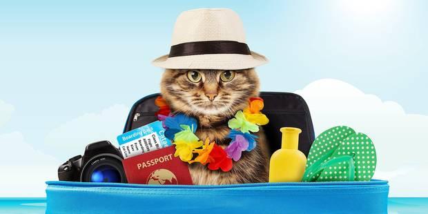 Les bons conseils pour partir en voyage avec son chat - DH Les Sports+