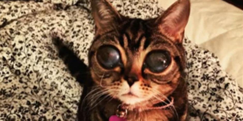 Matilda, le chat extraterrestre, affole la toile (VIDEO)
