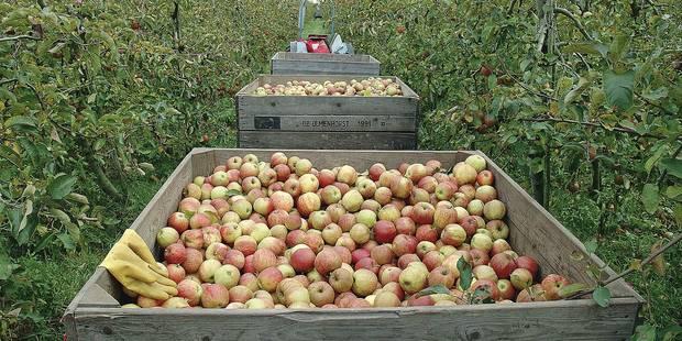 Pommes et pesticides: quand verger rime avec danger - La DH